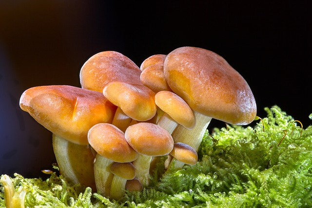 houbičky v mechu